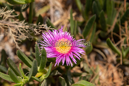 vegetation on rhodes island greece
