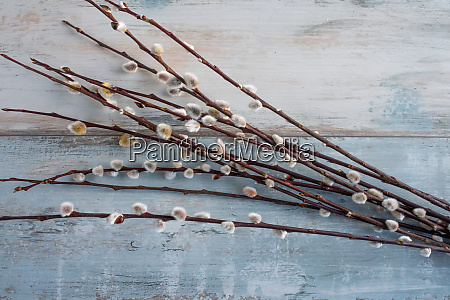 willow branches on wooden background