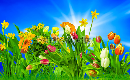 colorful flowers on a meadow in