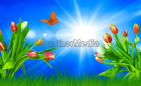 spring tulips on grass with an