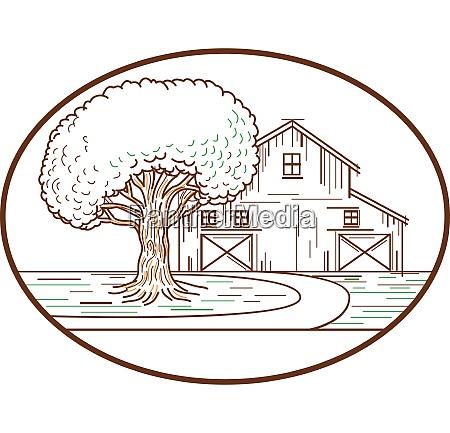 american barn oak tree mono line