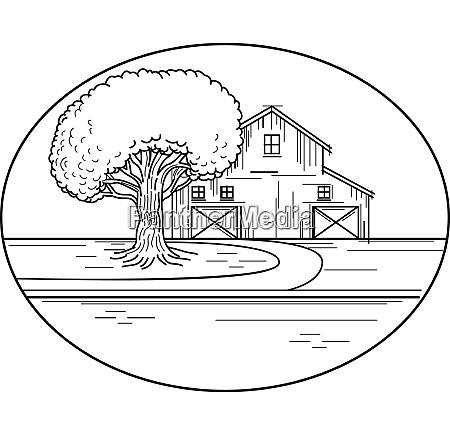 american barn front oak tree mline