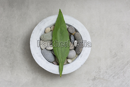 zen style still life with green