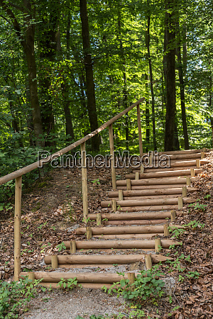 stable stairs in the forest