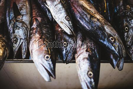 high angle close up of fish