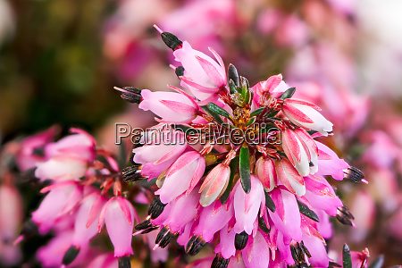 macro of blossoms from a winter