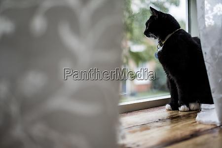 close up of black cat sitting