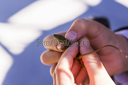 a childs hands holding a small