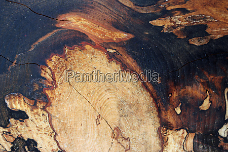 spalted beech tree sawn timber plank