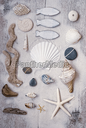 maritime still life with shells