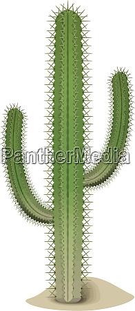cactus, green, desert, hot, dry, illustration - 28215334