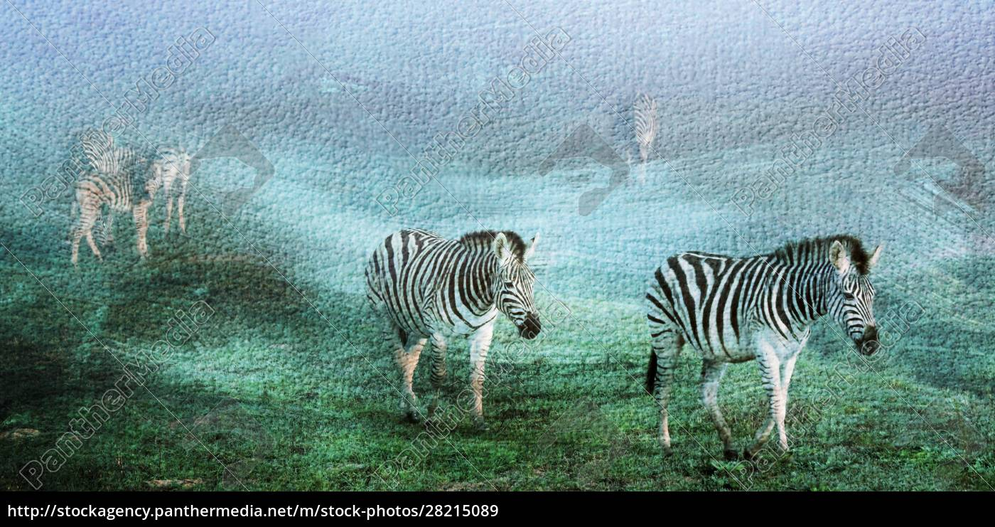 close, up, of, zebras, on, a - 28215089
