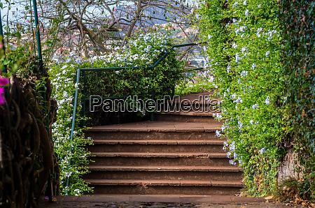 footpath, in, the, botanical, garden - 28215486