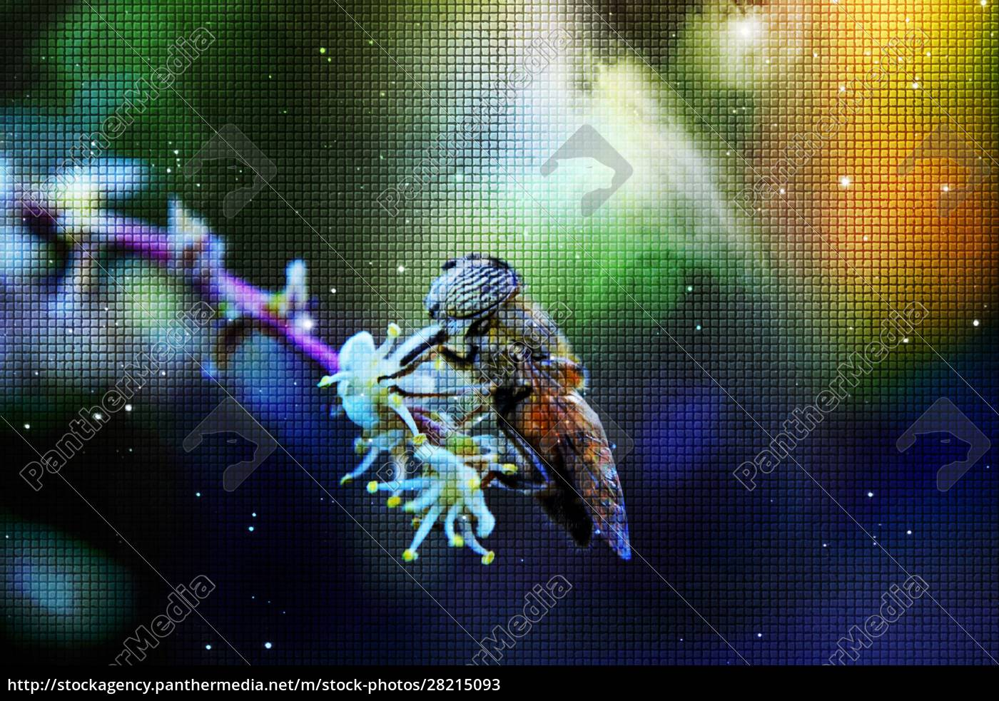 macro, image, of, a, hover, fly - 28215093