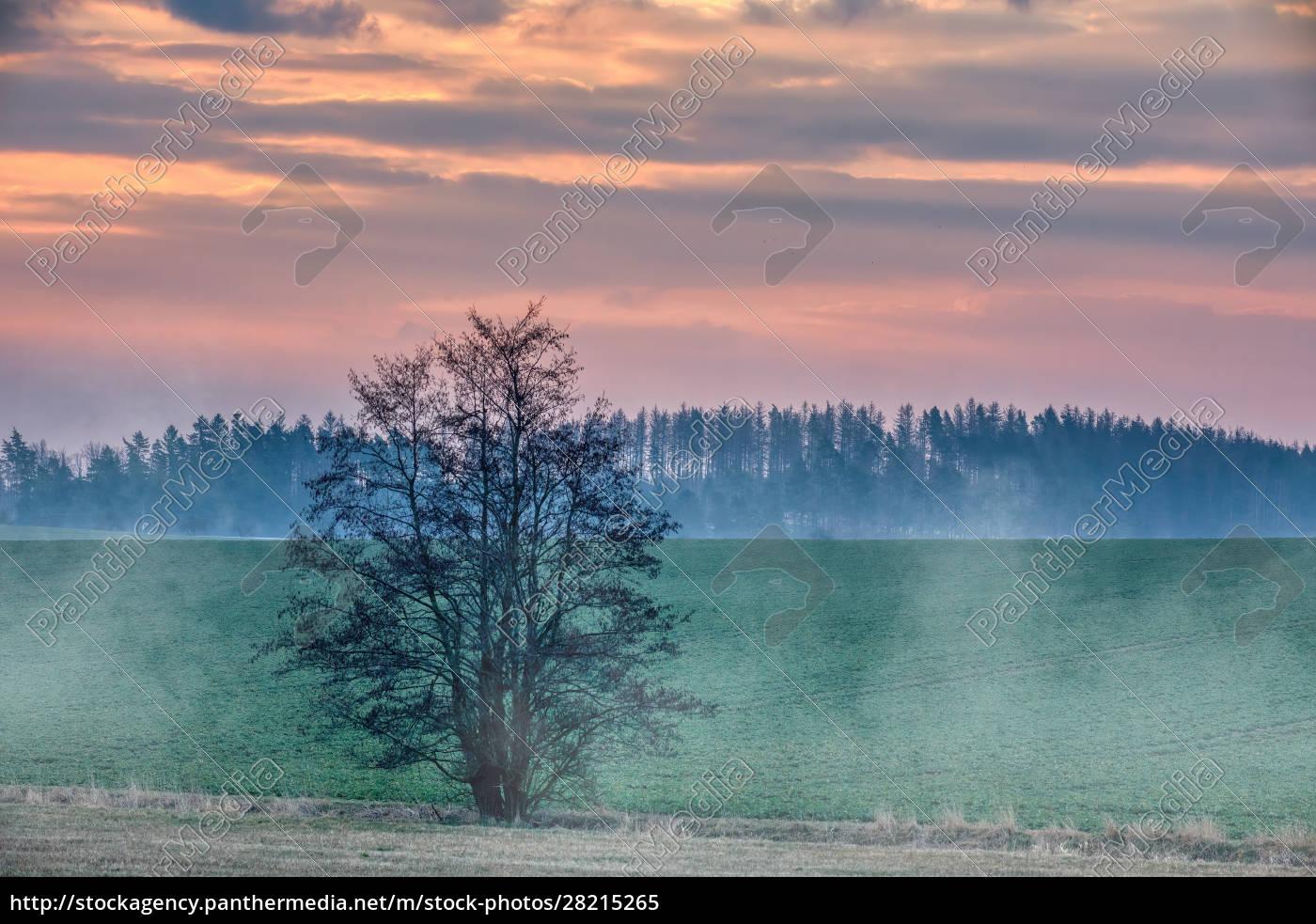spring, foggy, and, misty, sunrise, landscape - 28215265