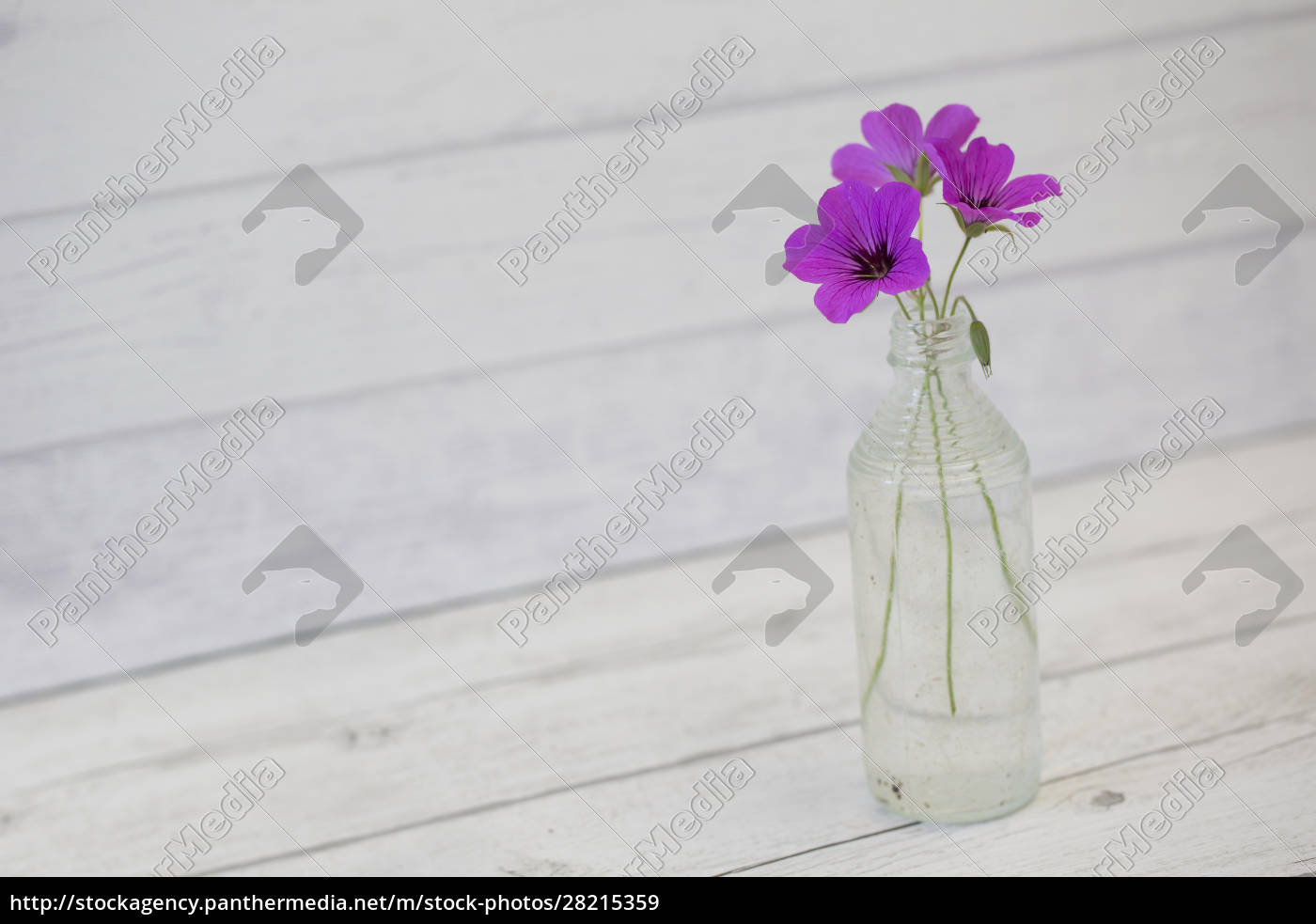 still, life, with, little, pink, flowers - 28215359