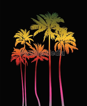 magical, palms, trees, at, night - 28216202