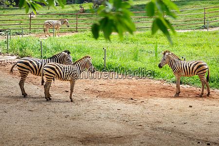 zebras, in, the, zoo, aviary - 28216193