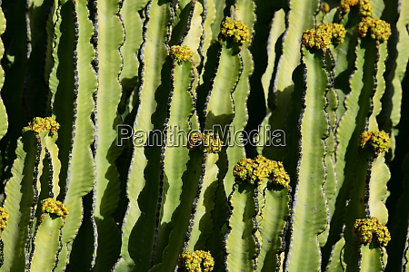 a, cactus, in, bloom, in, the - 28217549