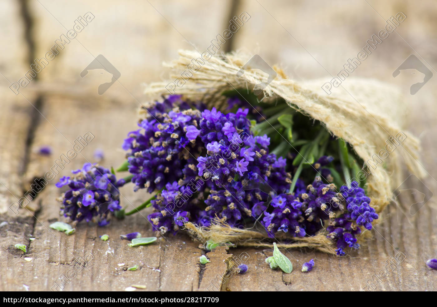 bunch, of, lavender, flowers, on, old - 28217709