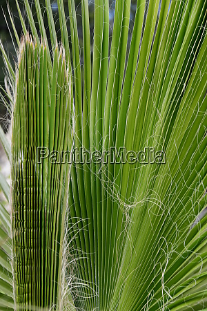 palm, leaves, in, the, province, of - 28217094