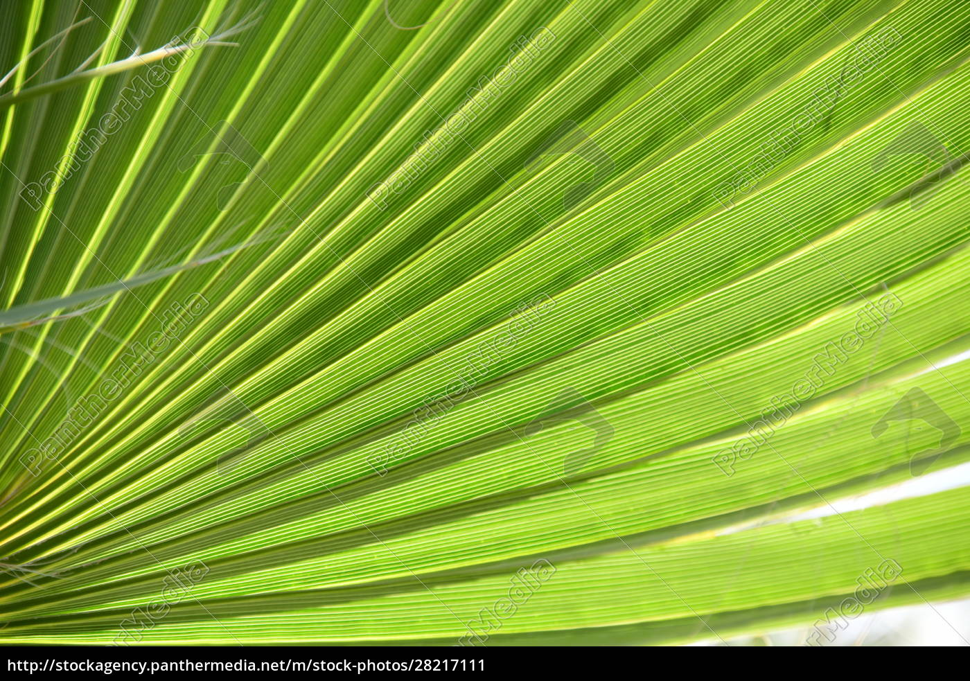 palm, leaves, in, the, province, of - 28217111