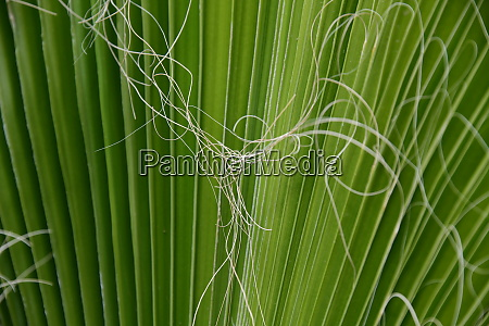 palm, leaves, in, the, province, of - 28217136