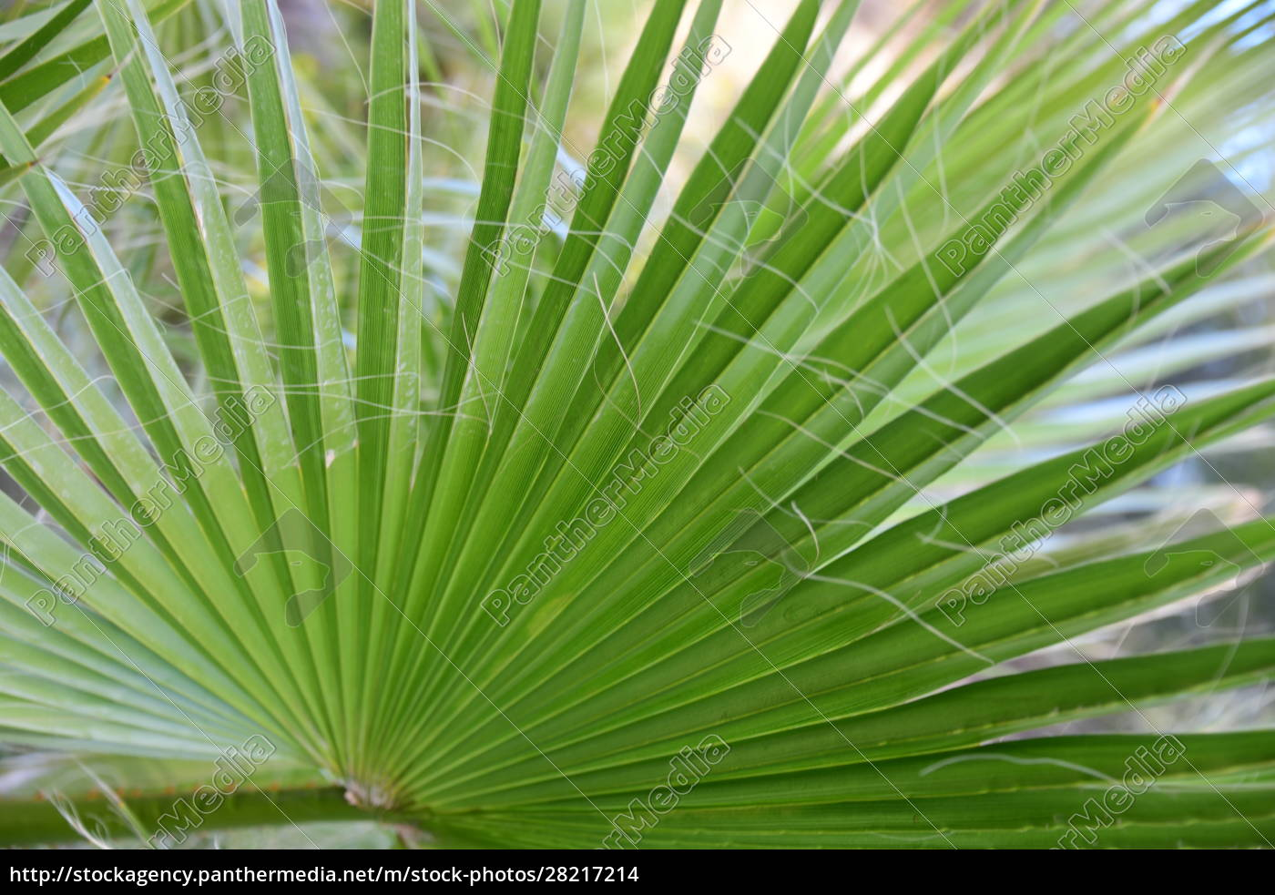 palm, leaves, in, the, province, of - 28217214