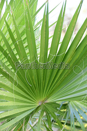 palm, leaves, in, the, province, of - 28217215