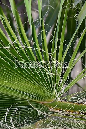 palm, leaves, in, the, province, of - 28217255