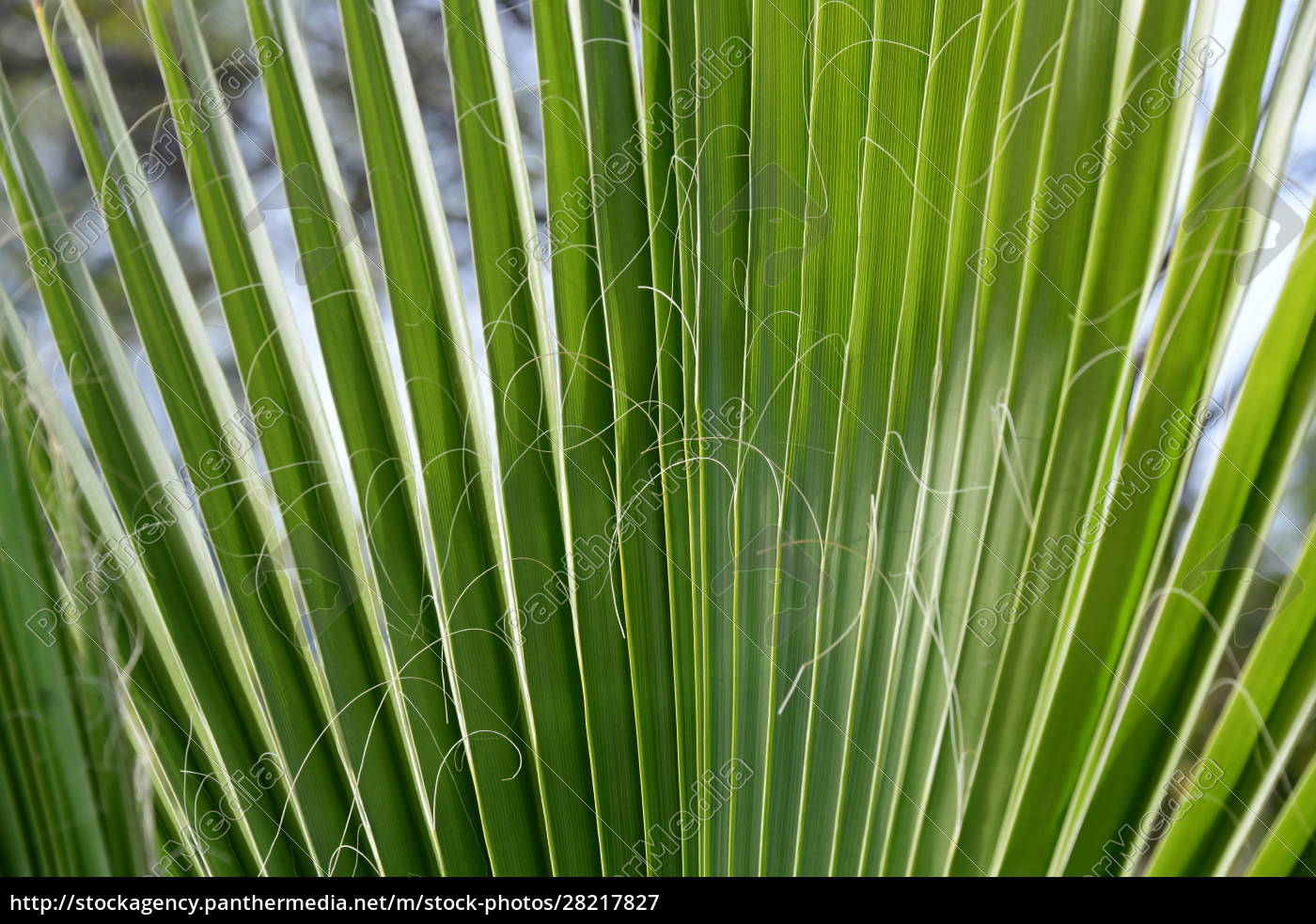 palm, leaves, in, the, province, of - 28217827