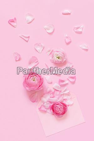 pink ranunculus flowers and envelope on