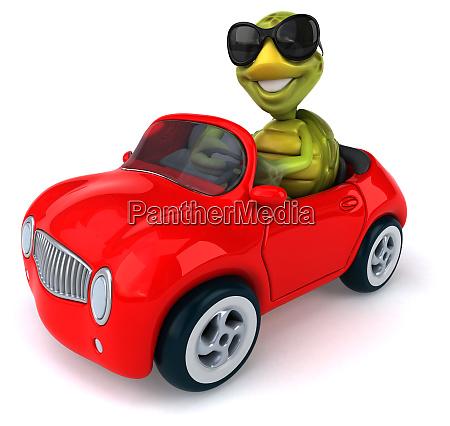 fun, turtle - 28218020