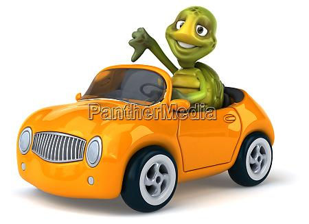 fun, turtle - 28218071