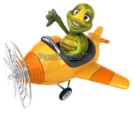 fun, turtle - 28218101