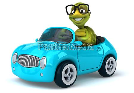 fun, turtle - 28218183
