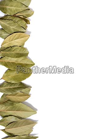 bay laurel leafs