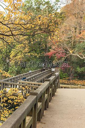 autumn foliage overlooking the wooden bridge