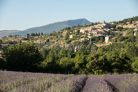 a lavender field with the village