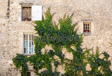 old tenement house overgrown with ivy