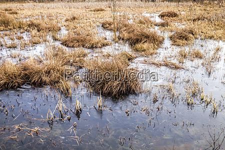 swamp in winter daytime
