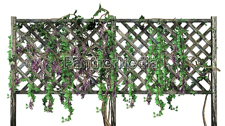 fence with vine tendrils on white