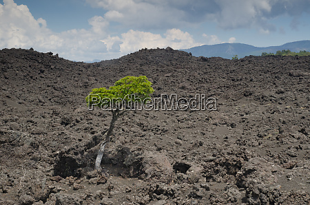 tree on a field of solidified