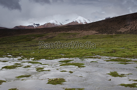 lauca river meadow and snowy peaks
