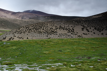 meadow and hill in lauca national