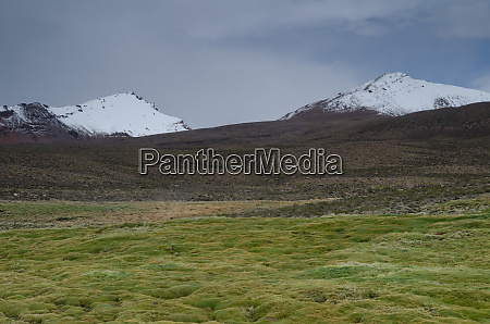 meadow and snowy peaks in lauca