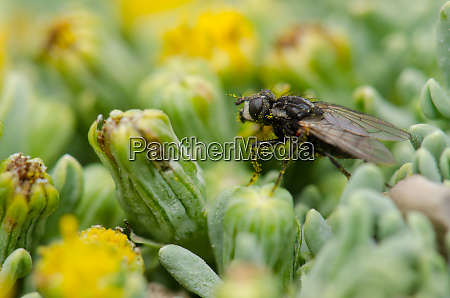 fly on a plant in lauca