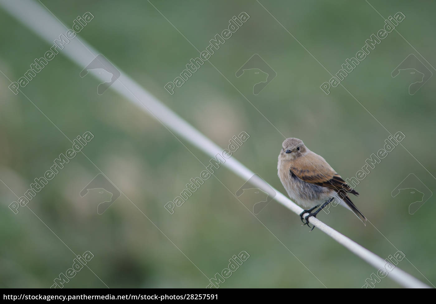 bird, perched, on, rope, in, the - 28257591