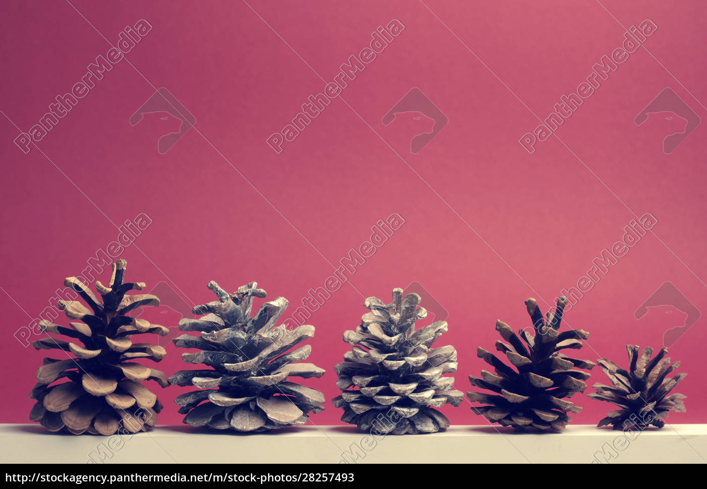 five, pine, cones, on, a, white - 28257493