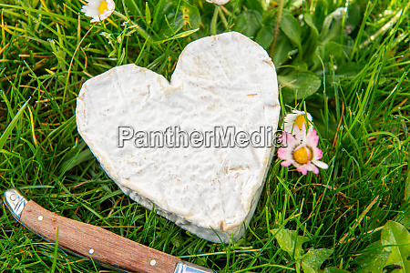 french, neufchatel, cheese, on, grass - 28257657